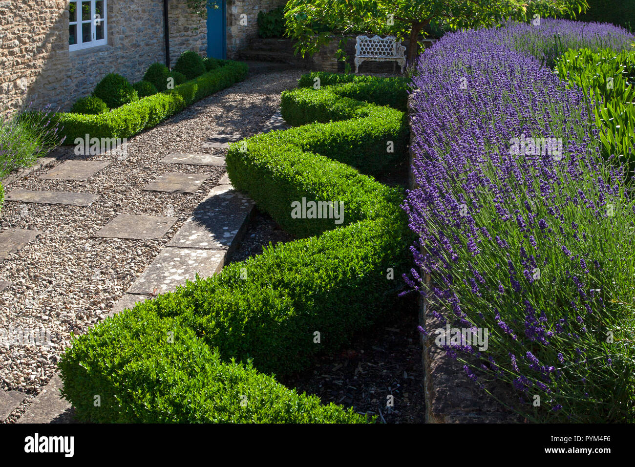 Box hedging and lavender in front English Garden,England,Europe - Stock Image