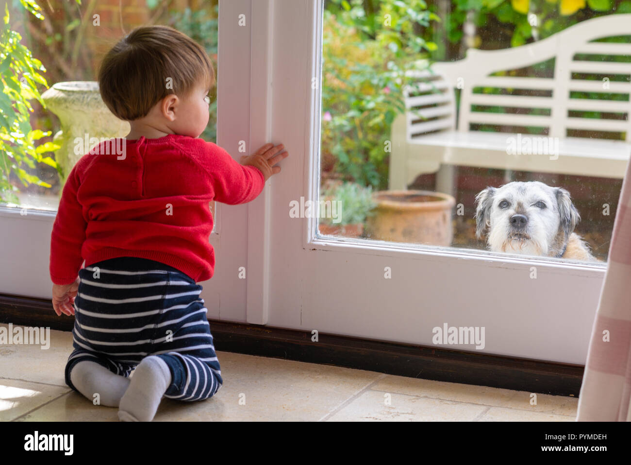 Boy toddler looking out of a patio window into the garden with a dog on the outside looking back in. - Stock Image
