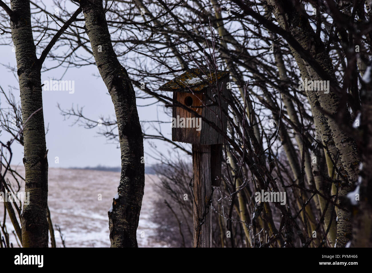 bird house hidden in the trees Stock Photo