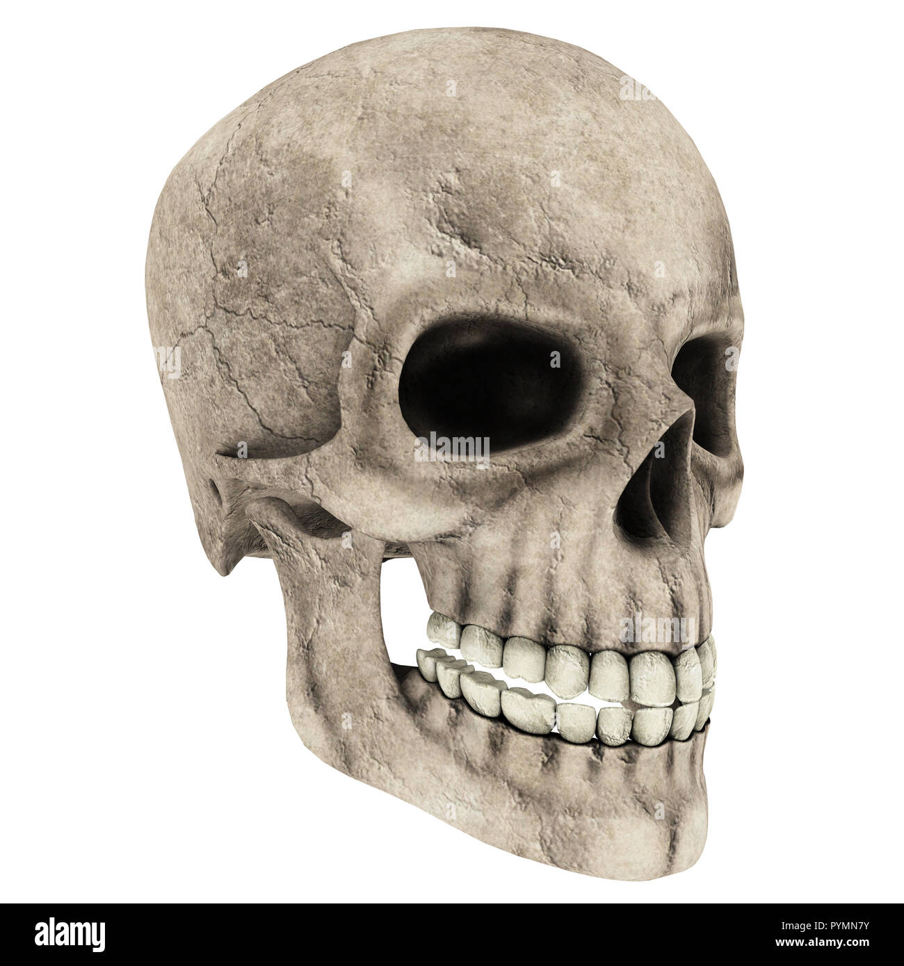 skull isolated in White background 3d illustration for Hallowee or design - Stock Image