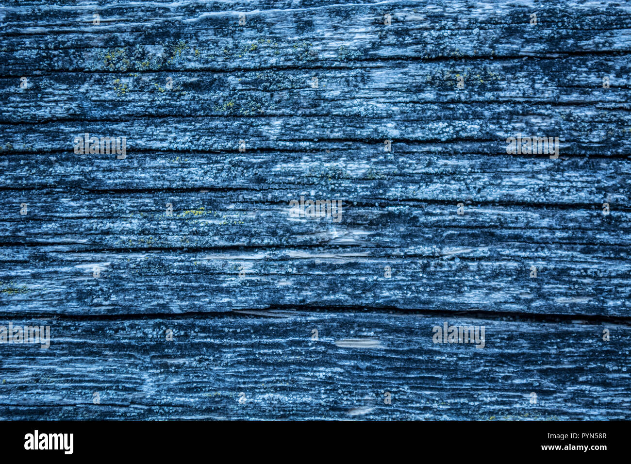 Blue realistic old wood textures - Stock Image