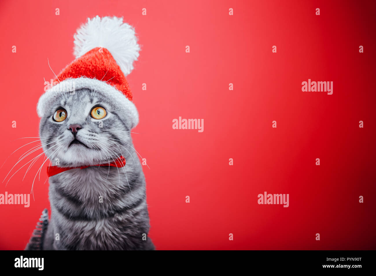 Grey tabby cat wears Santa's hat isolated on red background. Christmas and New year concept - Stock Image