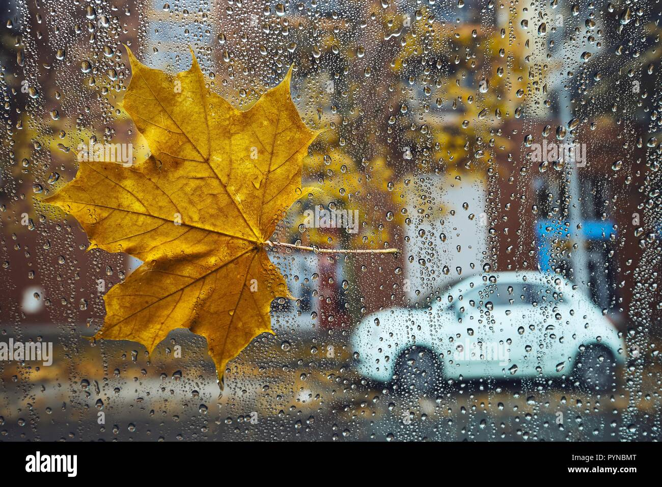 Autumn in the city. Fallen maple leaf and raindrops on a window of car against street. - Stock Image