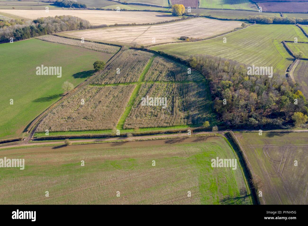Government funded Countryside Stewardship Scheme Tree Planting. - Stock Image
