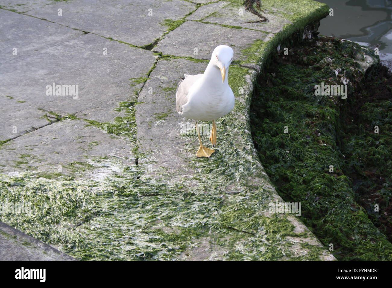 The seagull wonders what's the purpose of the garbage. - Stock Image
