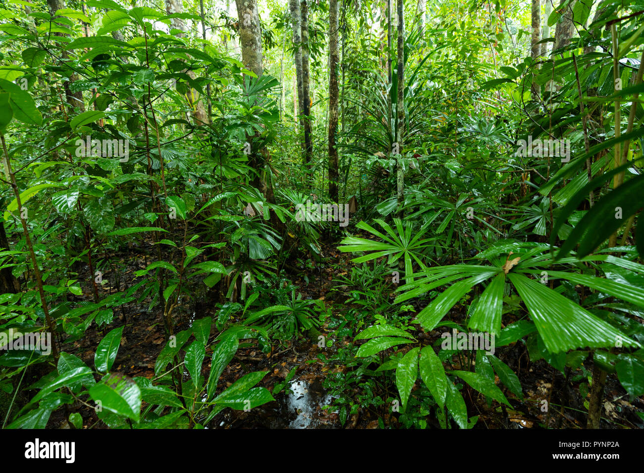 under a leaf in the rain forest stock photos under a leaf in the rh alamy com
