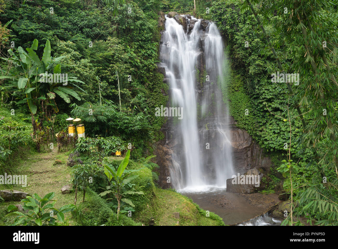 The Golden Valley waterfalll in the Munduk jungle, Bali, Indonesia - Stock Image