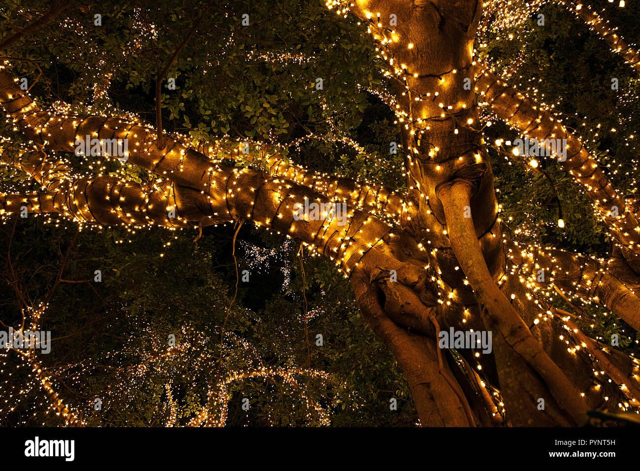 illuminated park, brisbane - Stock Image