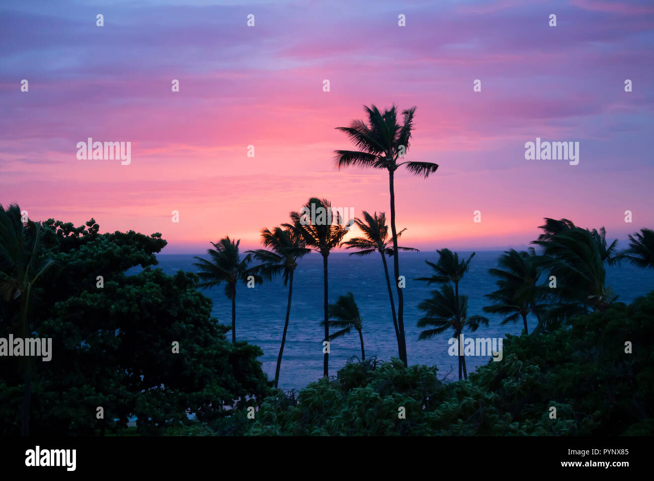 Palm Trees In Silhouette Before Pink And Purple Sunset Sky With Sun Sinking On Horizon Of Ocean Stock Photo Alamy