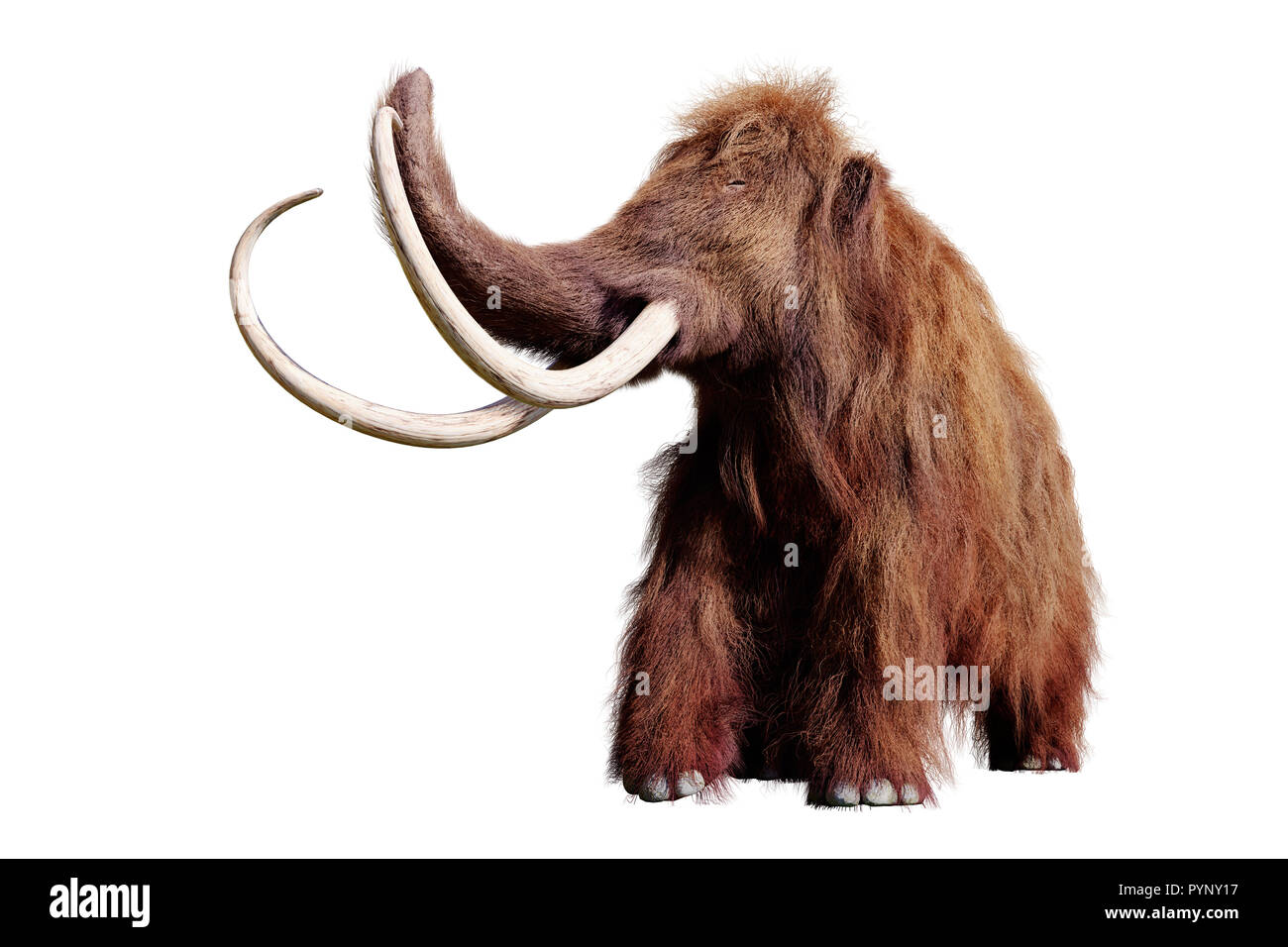 Ice Age Mammal Stock Photos & Ice Age Mammal Stock Images - Alamy