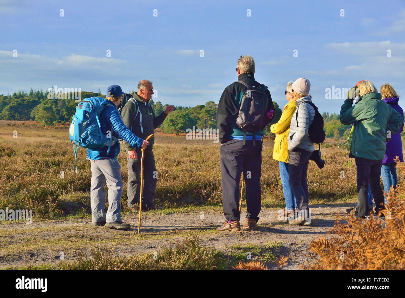 Official Guide on the New Forest National Park walking -festival explaining the heathland on Whitefield Moor to walkers on walking tour - Stock Image