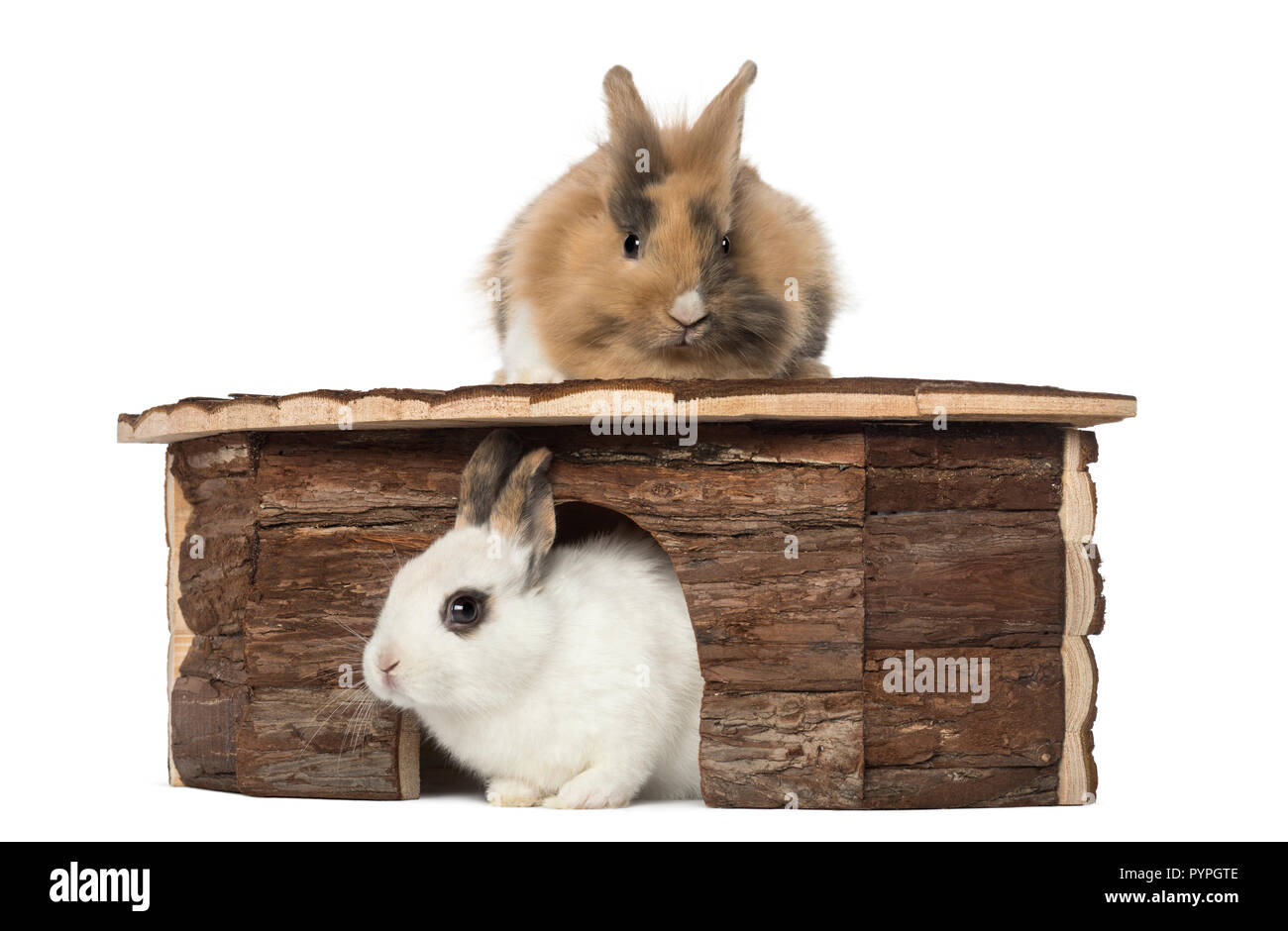 Rabbit lying on the roof of a shelter and another is lying at the entry - Stock Image