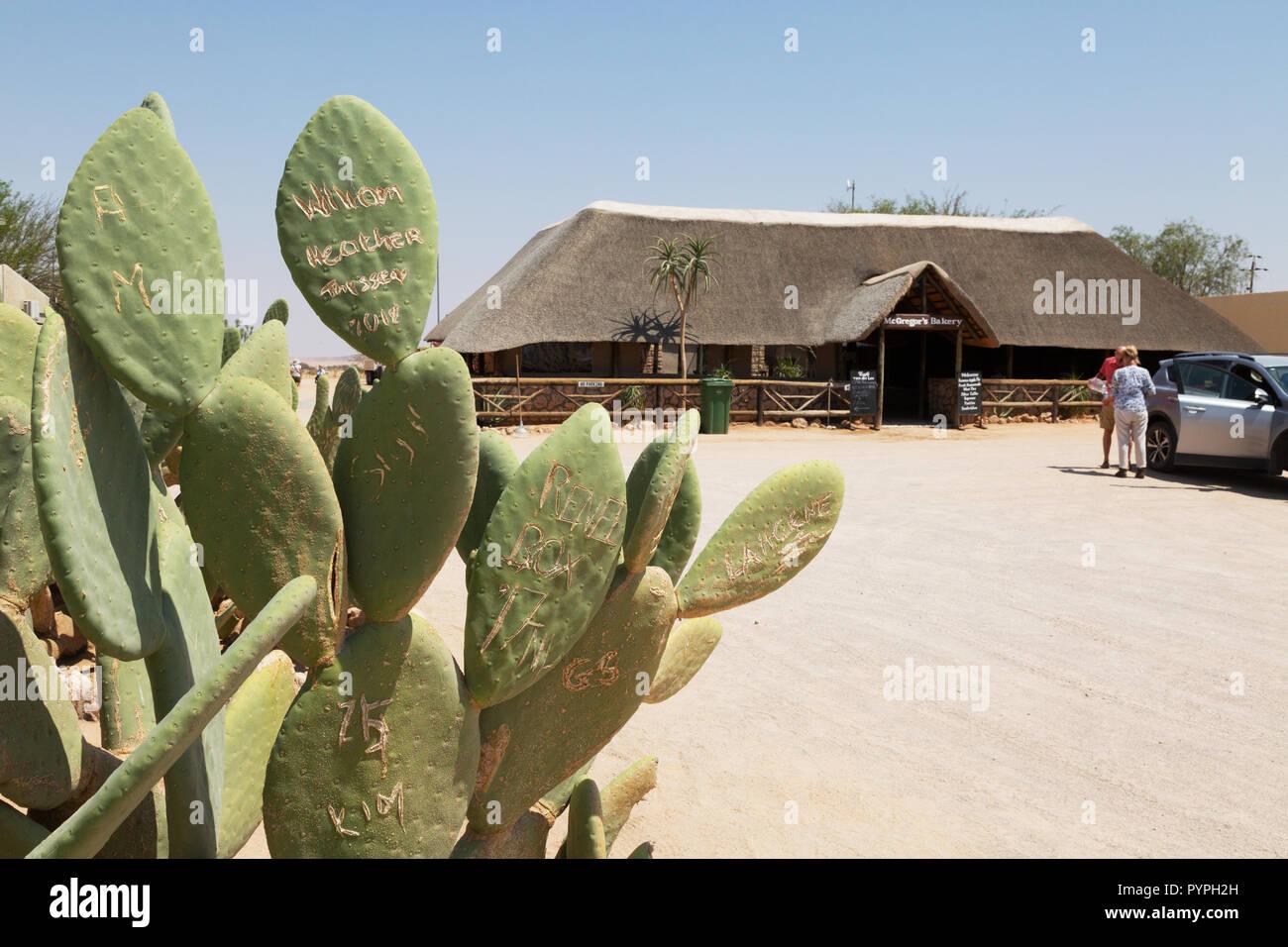 Namibia travel - graffiti on cacti outside Mcgregor's bakery, Solitaire, Namibia Africa - Stock Image