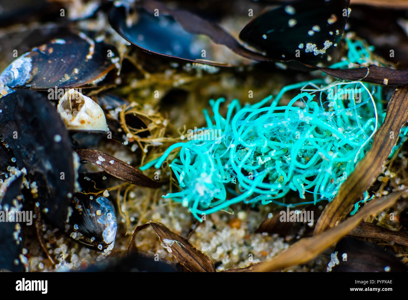 Macro close up of jetsam washed on a beach showing sea pollution with plastic nets - Stock Image
