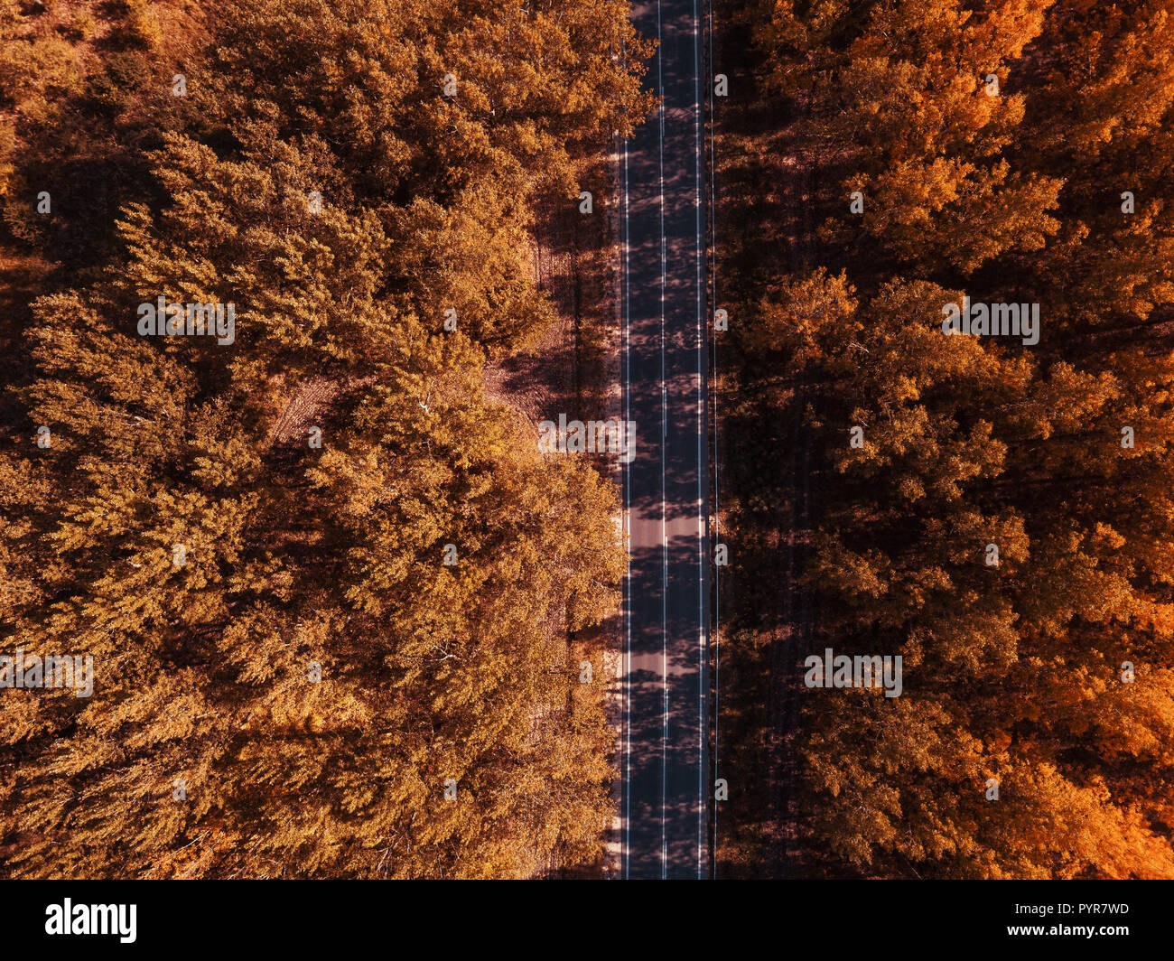 Aerial photography of empty road through autumn forest, top view drone point of view - Stock Image