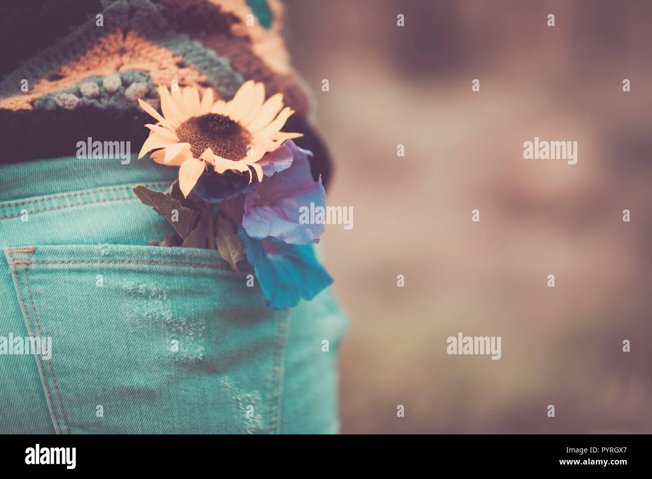 close up with vintage tones and colors of sun flower on the rear pocket of casual woman jeans back. peace and love onceptual image for hippy style and - Stock Image