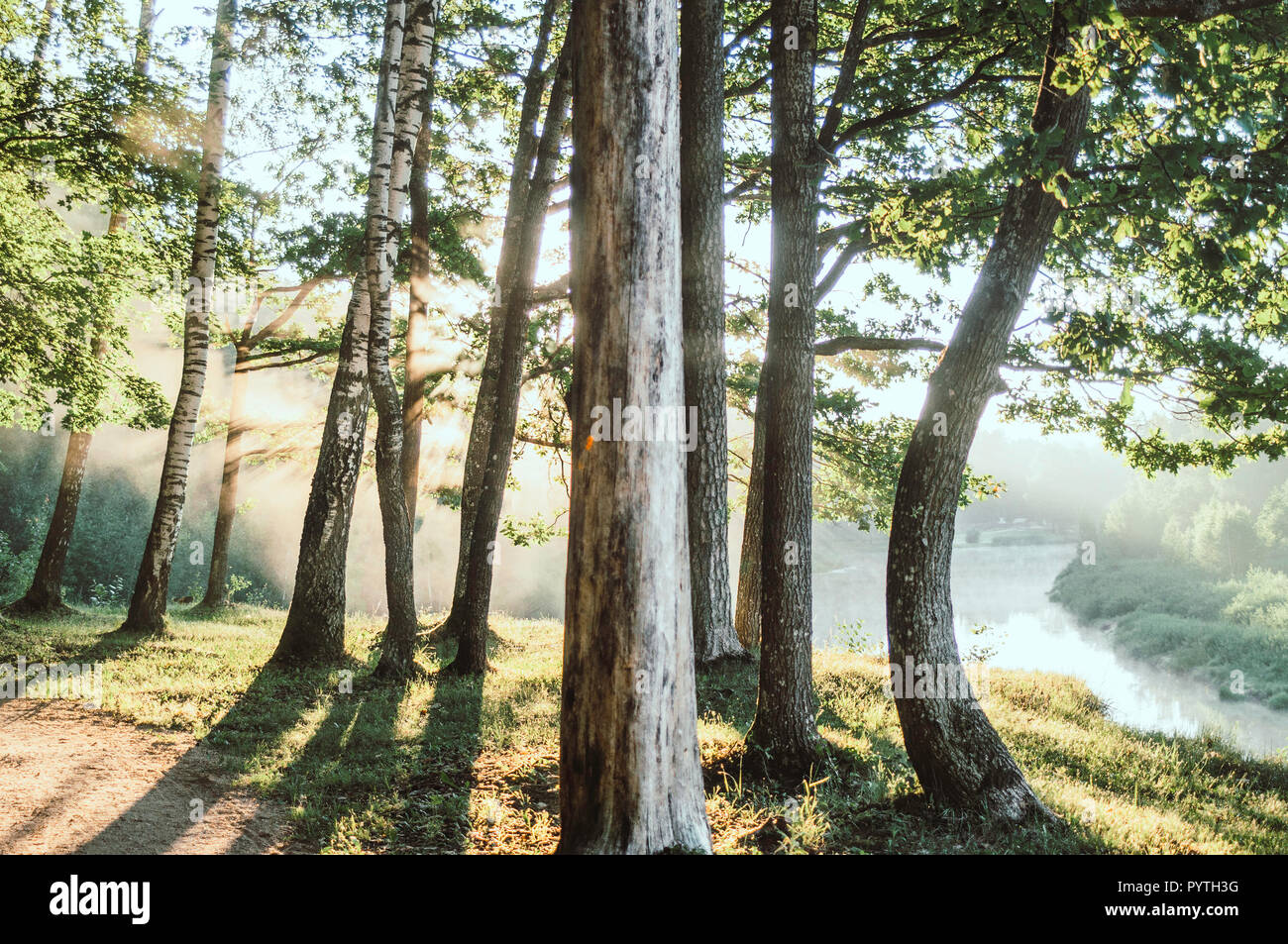 Sun rays shines trough the tree trunks. Early summer morning. - Stock Image