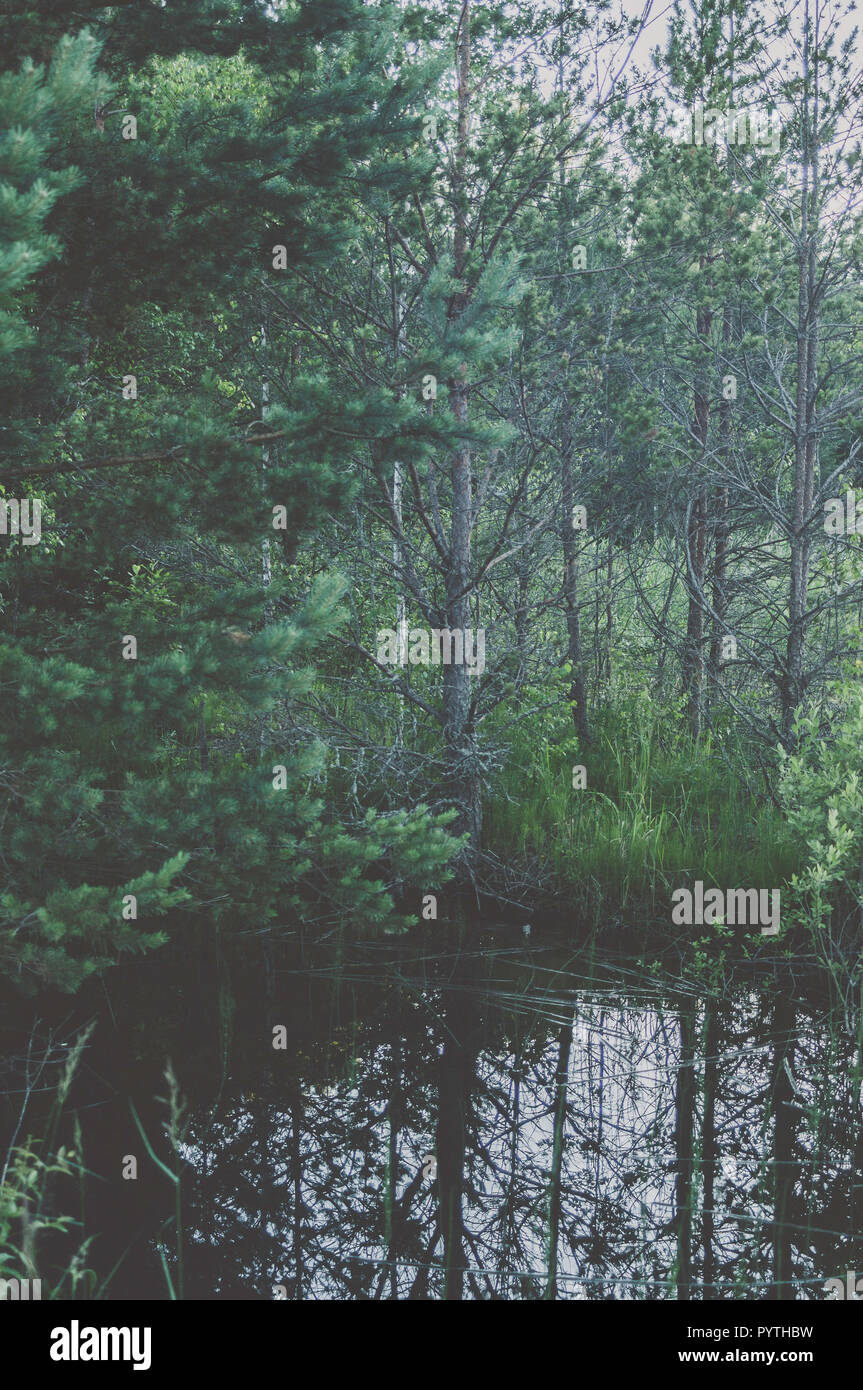 Green Landscape view with green trees and reflection in water. Summer time. Stock Photo