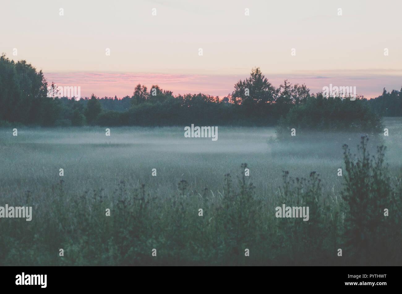 White fog lays over the grass field. Romantic summer evening scene. - Stock Image