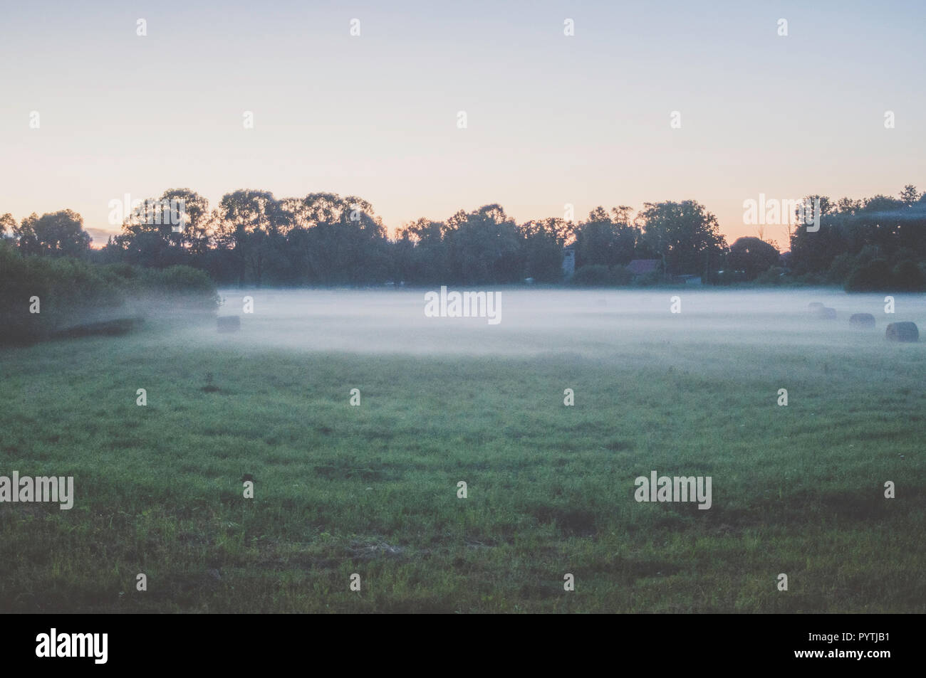 White fog lays over the grass field. Romantic summer evening scene. - Stock Image