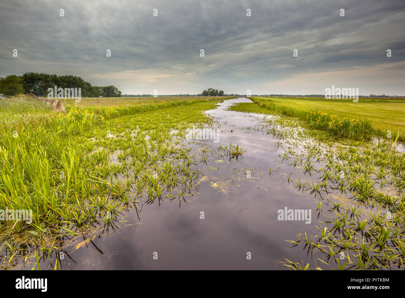 Water vegetation dominated by Water Soldier (Stratiotes aloides) also known as Crab's claw. This is the natural habitat of protected rare dragonfly sp Stock Photo
