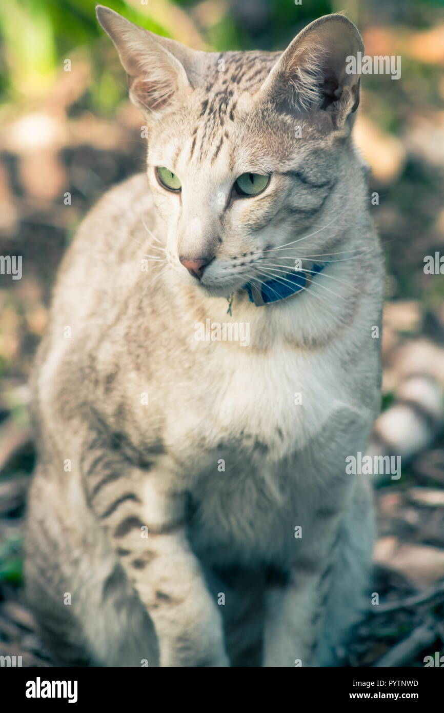 Close up portrait image of a domestic cat full frame - Stock Image