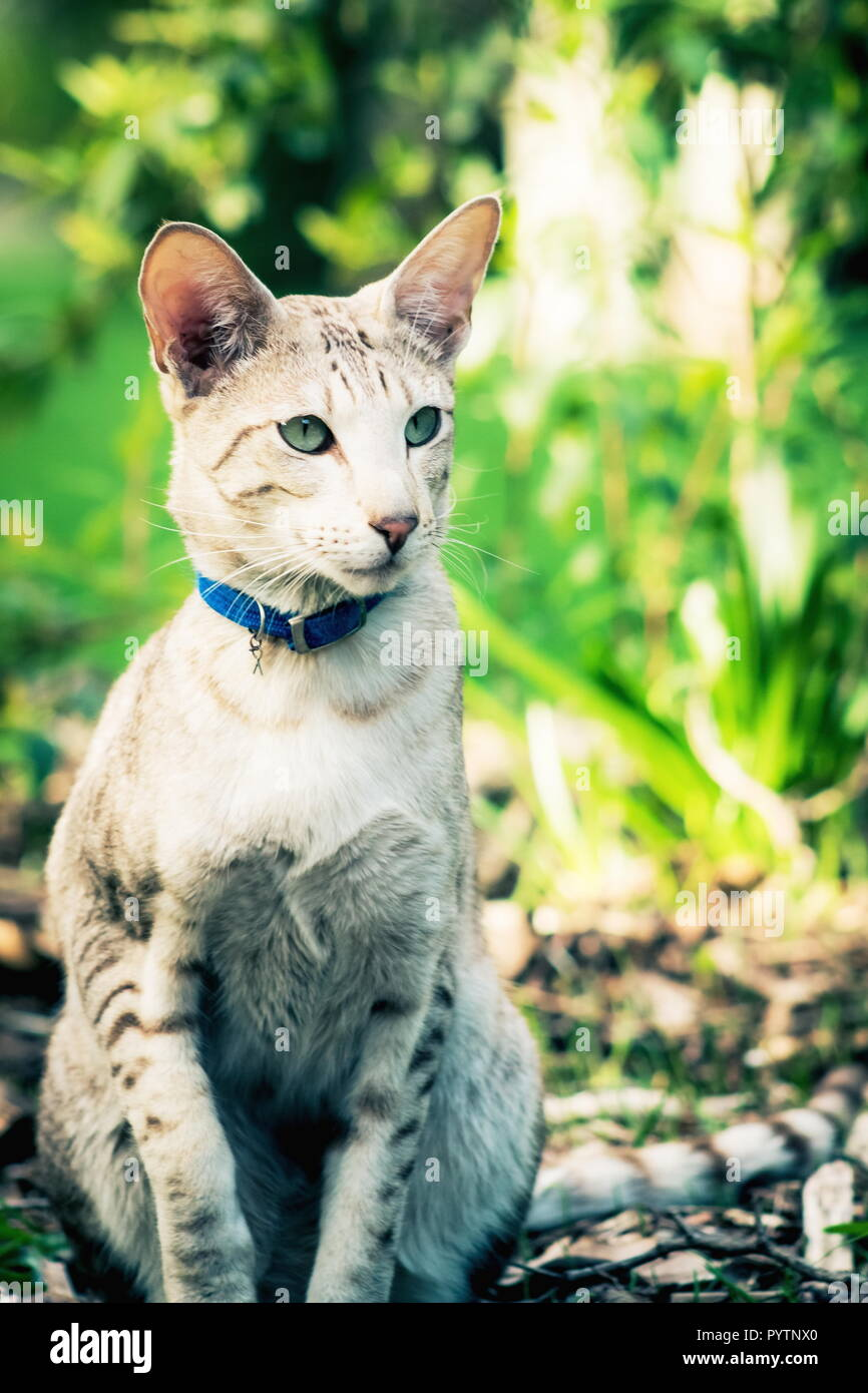 Close up portrait image of a domestic cat in a garden with copy space - Stock Image