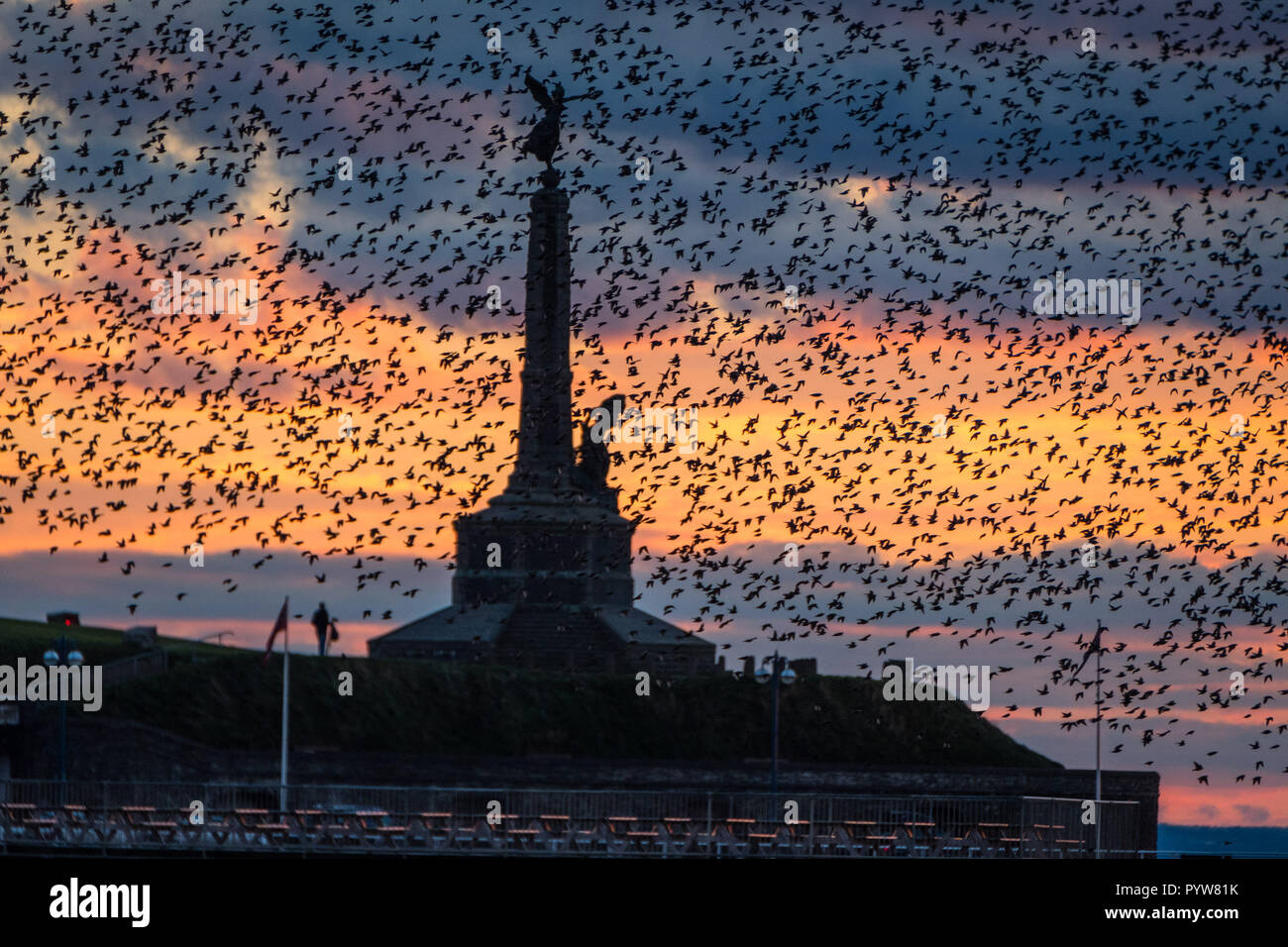 Aberystwyth Wales UK, 30/10/2018. UK Weather: As the sun sets on clear, cold  and sunny October day tens of thousands of tiny starlings fly in dense 'murmurations' in the sky above Aberystwyth's iconic war memorial,  before swooping down to roost for the night on the forest  of cast iron legs underneath the town's Victorian seaside attraction. Aberystwyth is one of the few urban roosts in the country and draws people from all over the UK to witness the spectacular nightly displays.  photo credit: Keith Morris / Alamy Live News - Stock Image
