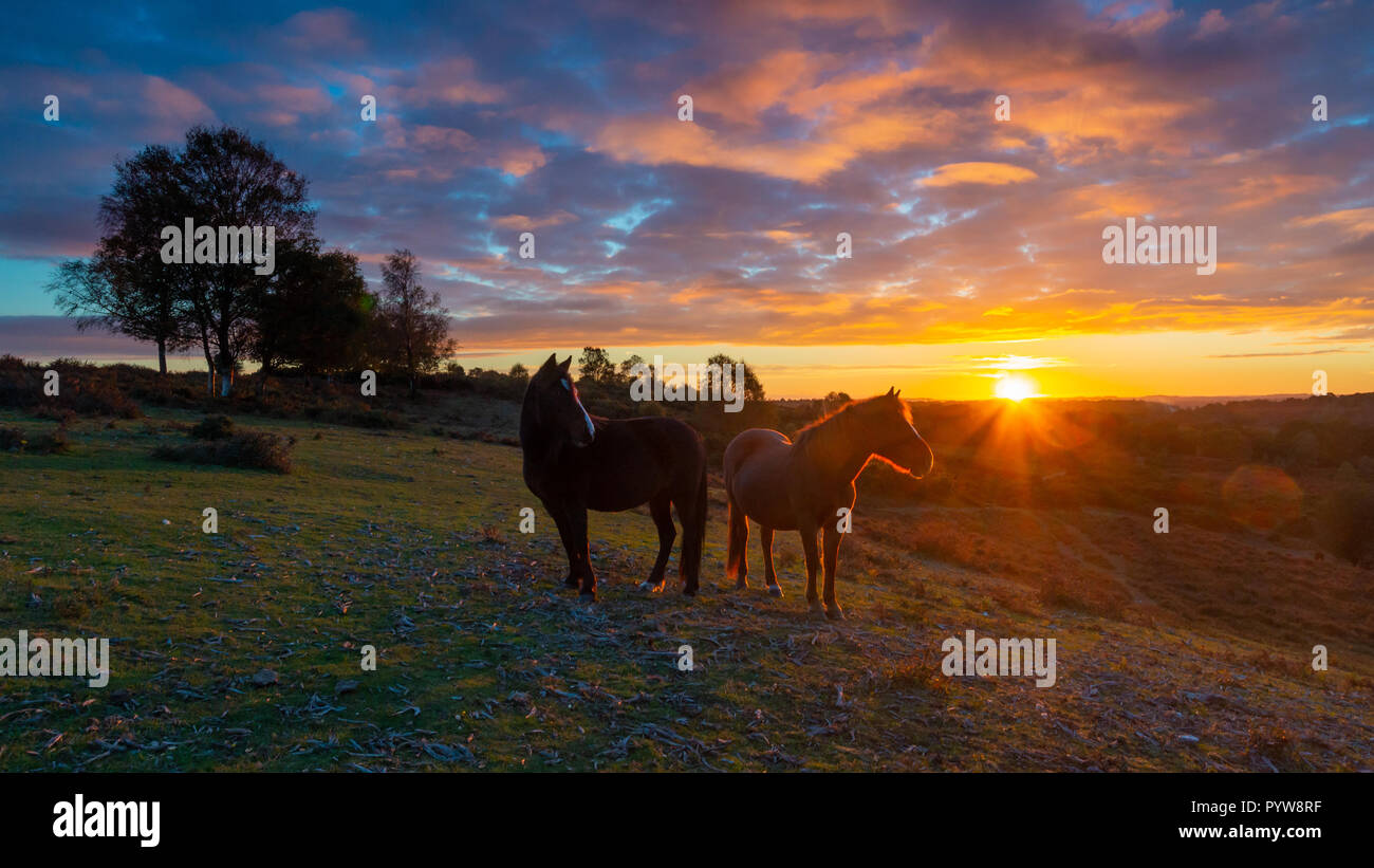 Godshill, New Forest, Hampshire, UK, 30th October 2018, Weather: Clearing skies are set to allow temperatures to fall to zero degrees overnight. Two ponies look out over a valley as a glorious fiery orange sunset takes place against a cloud speckled blue sky behind them. Credit: Paul Biggins/Alamy Live News - Stock Image