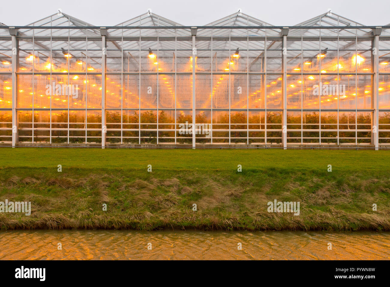 Warm light through moist glass of a giant commercial glasshouse - Stock Image