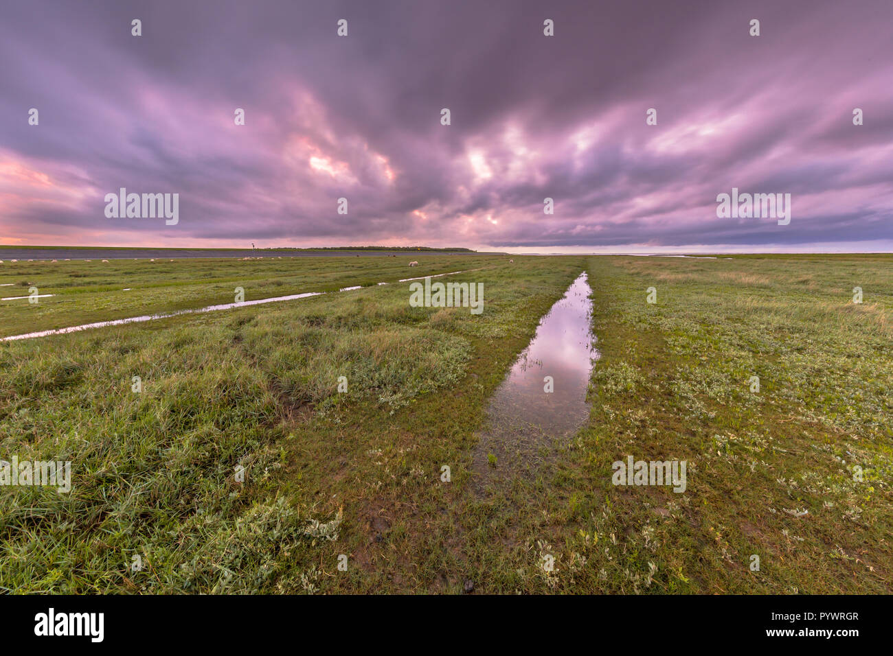 Sunset over ditch in tidal marsh flat at Waddensea, Friesland, Netherlands Stock Photo