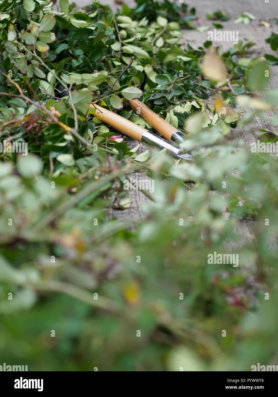 Yard lopper among bush clippings - Stock Image