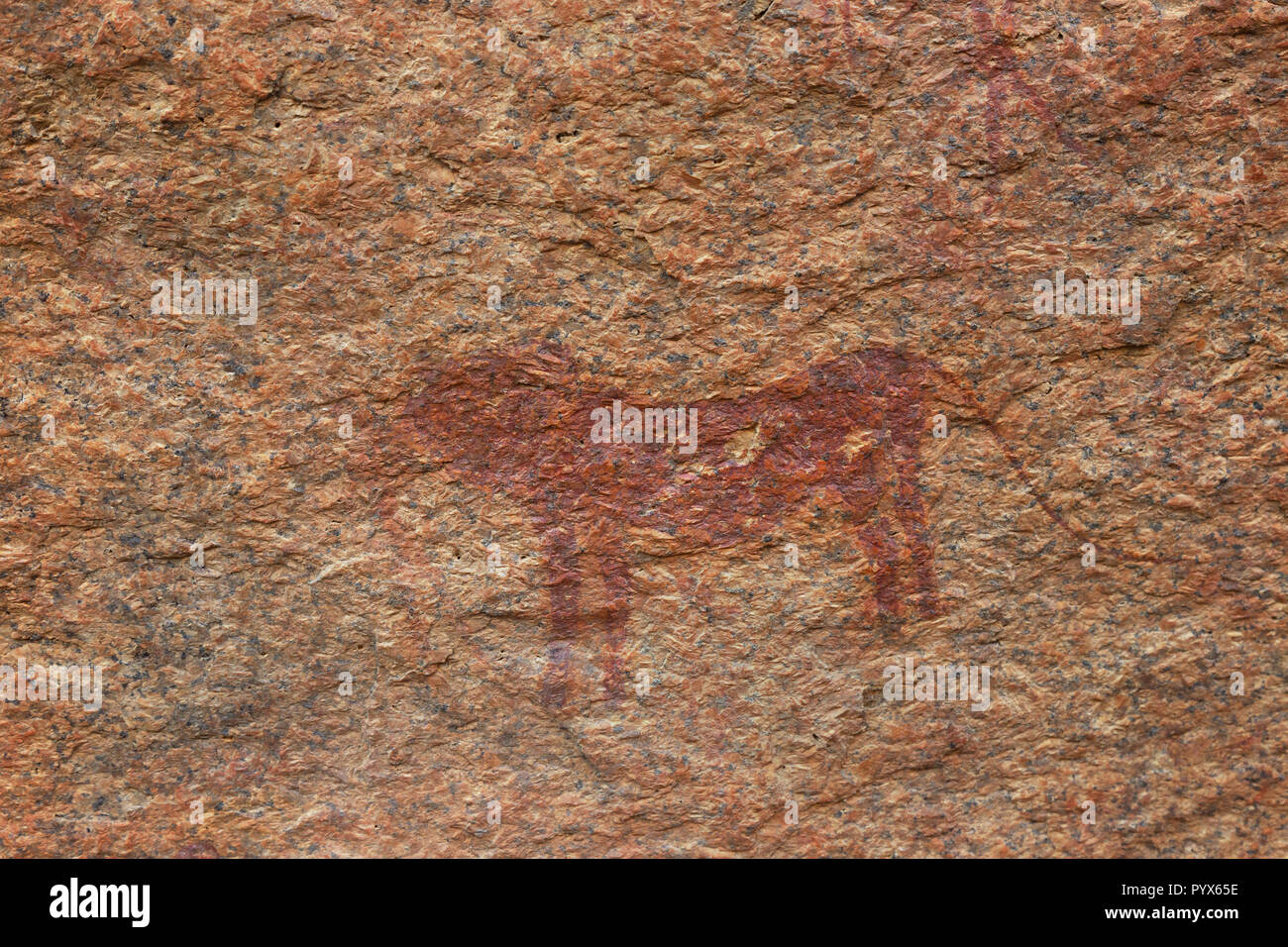 Namibia rock painting - ancient rock art by bushmen showing a lion, about 2000 years old; Small Bushman Paradise, Spitzkoppe, Namibia Africa - Stock Image