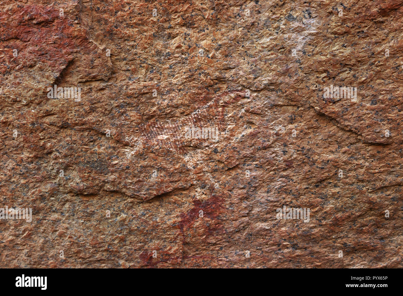 Namibia rock painting - ancient rock art by bushmen showing a zebra, about 2000 years old; Small Bushman Paradise, Spitzkoppe, Namibia Africa - Stock Image