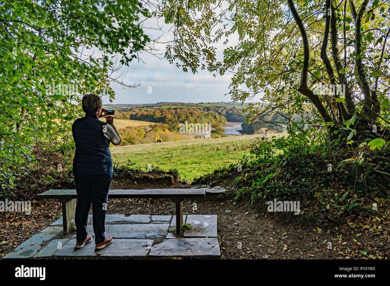 woman taking photo of countryside and river fal creek near truro, cornwall, england, britain, uk. - Stock Image