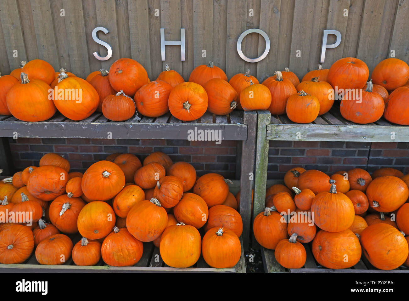 Halloween Retail shopping, Orange Pumpkins, - Stock Image