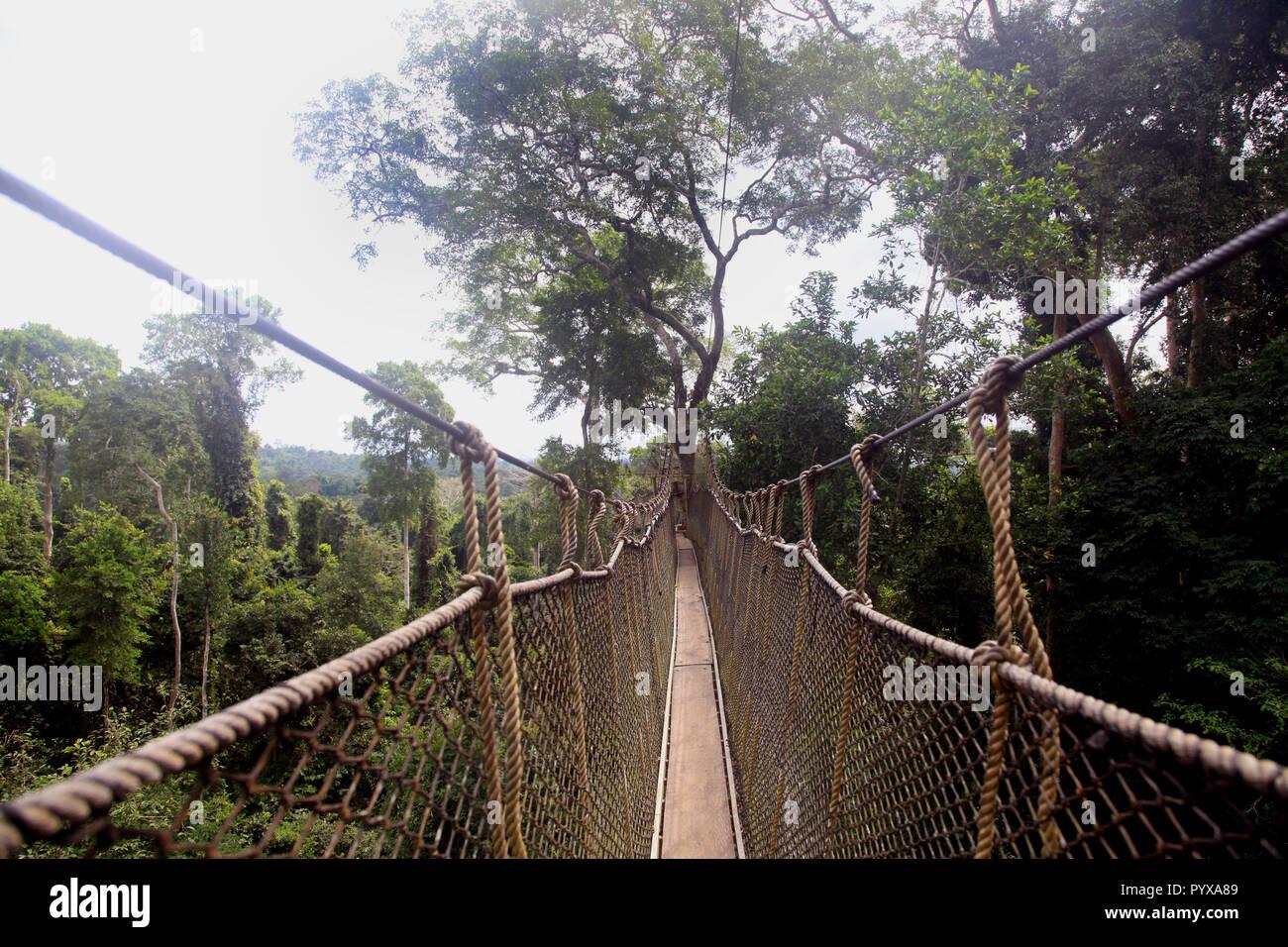 Tree canopy walk at Kakum National Park, Ghana Stock Photo