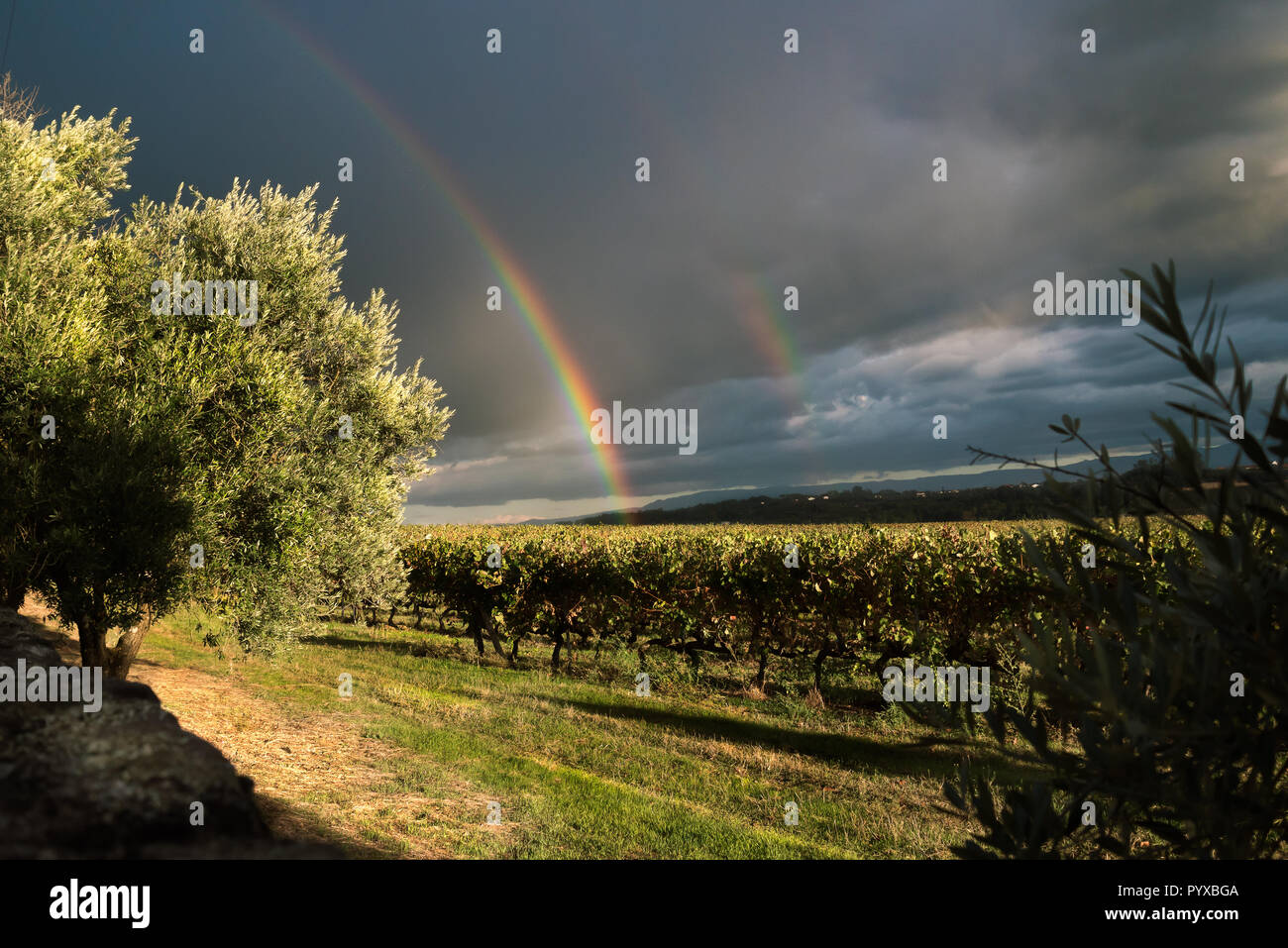 Serra da Estrela at sunset with a rainbow on cloudy day and with a vine  as background - Stock Image