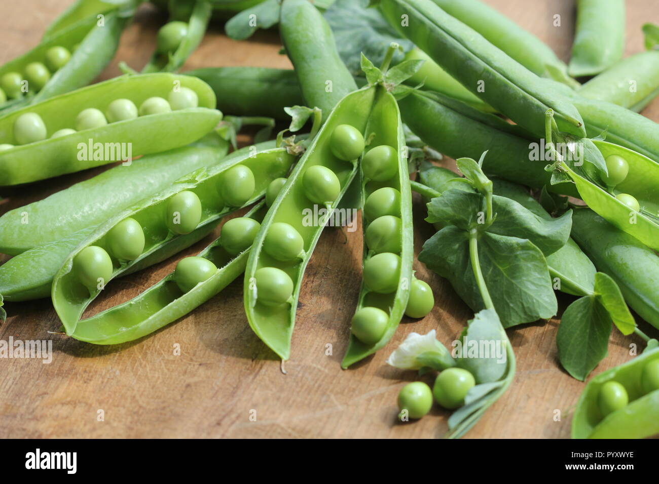 Ripe pods of green peas, fresh green peas on wooden table, close up . - Stock Image