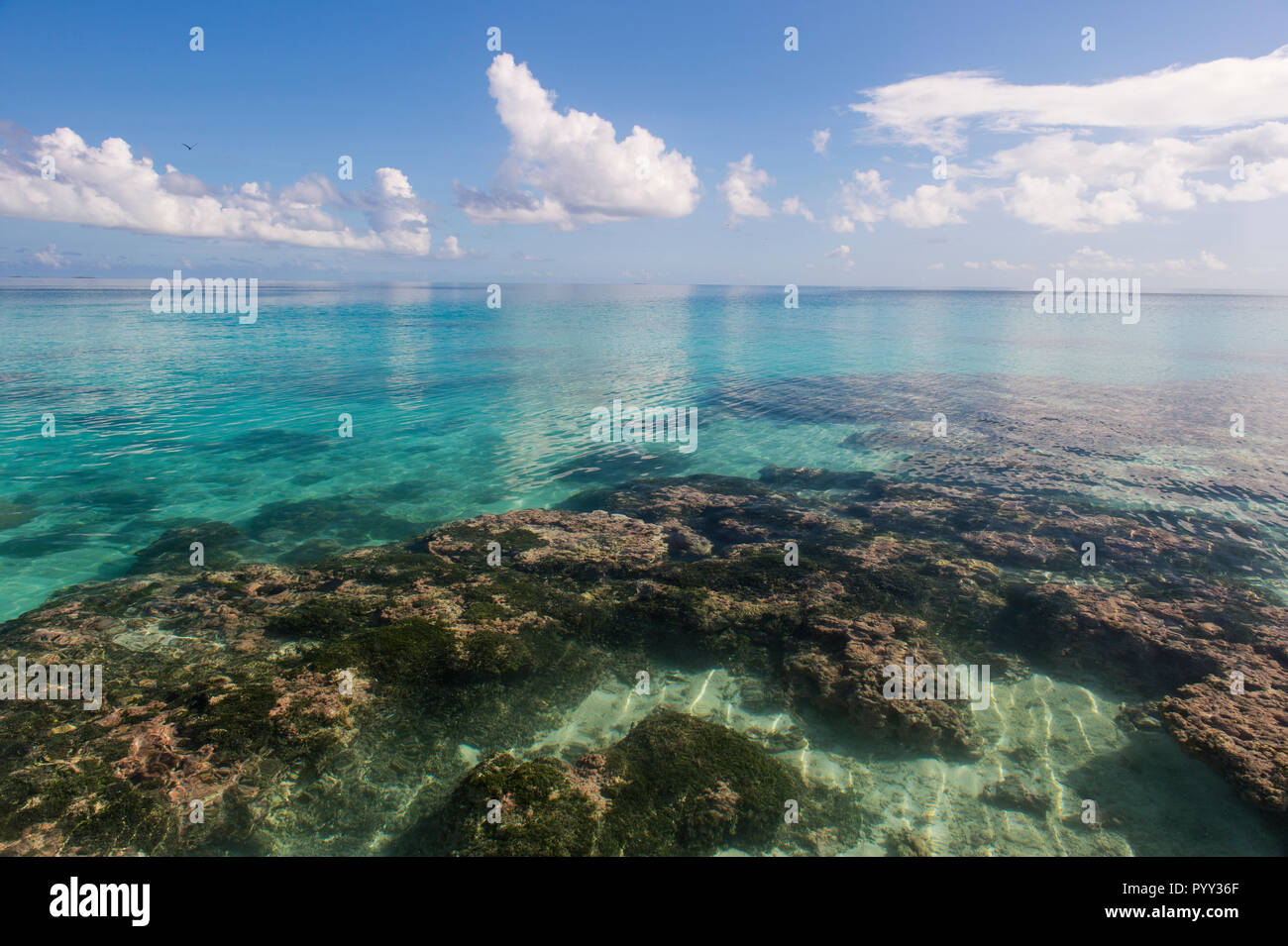 Clear waters, Tikehau, Tuamotu Archipelago, French Polynesia - Stock Image