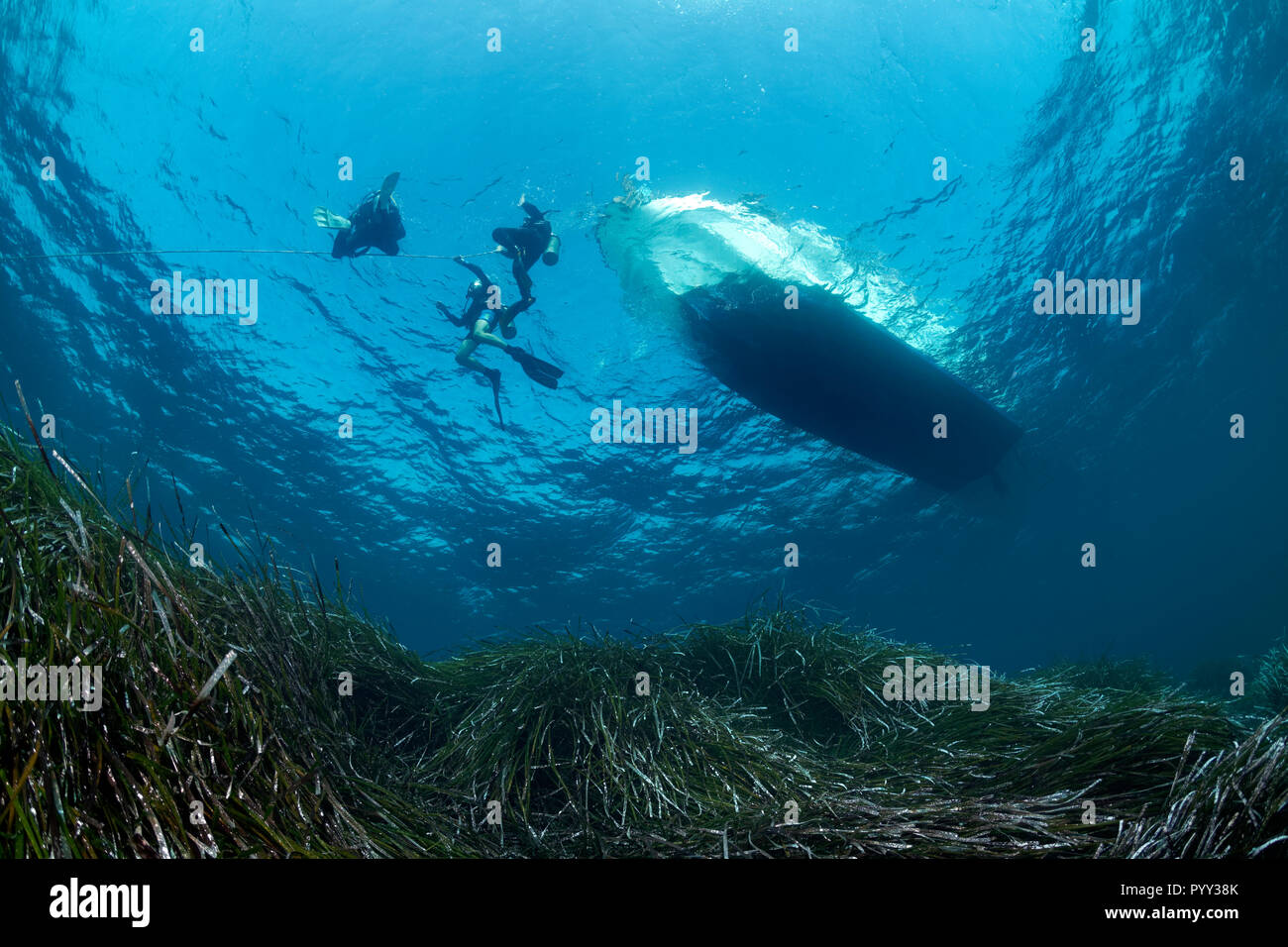 Divers dive on rope, Diving boat, Neptune Grass (Posidonia oceanica), Mediterranean Sea, Southern Cyprus, Cyprus - Stock Image