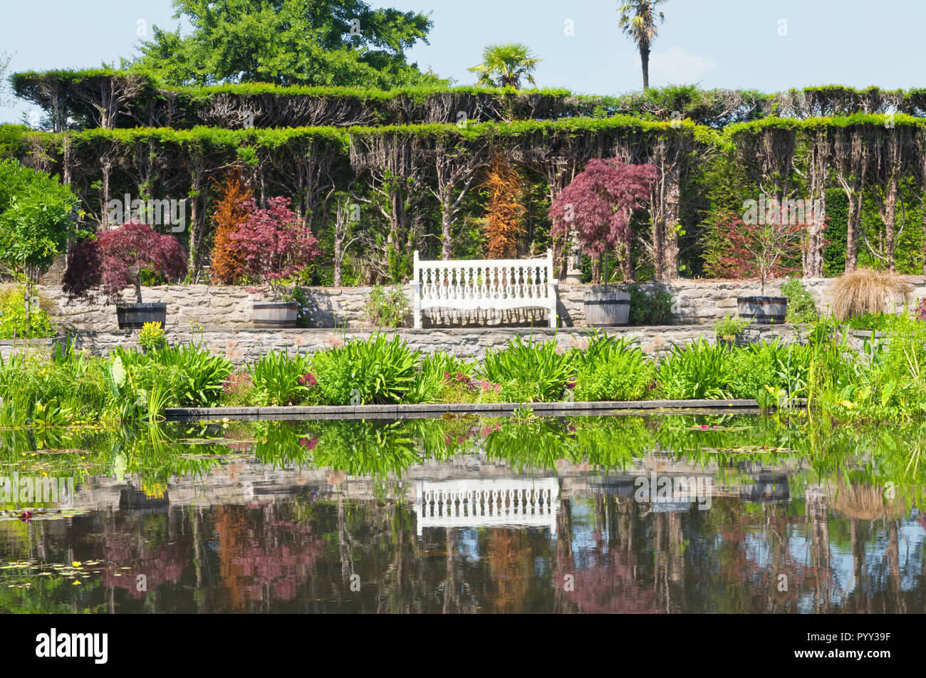 White wooden bench reflecting in pond water with aquatic plants, by trimmed conifer hedge, barrel pots with ref maple trees, in English summer garden  - Stock Image