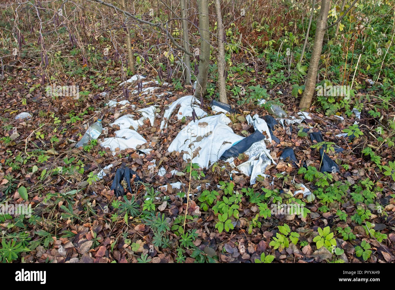 Plastic pollution of forest - Stock Image