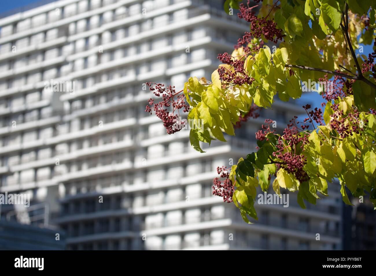 France, Ile de France, Paris 17th arrondissement, Paris, the new Batignolles neighborhood, around the Martin Luther King park, site construction, buildings, new neighborhood Stock Photo