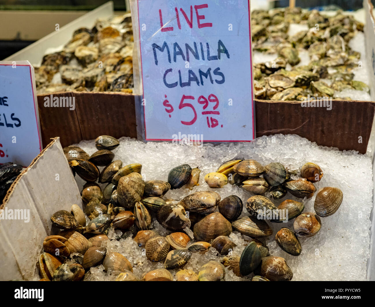 Live manila clams in ice for sale for 5.99 USD in fishermans market - Stock Image