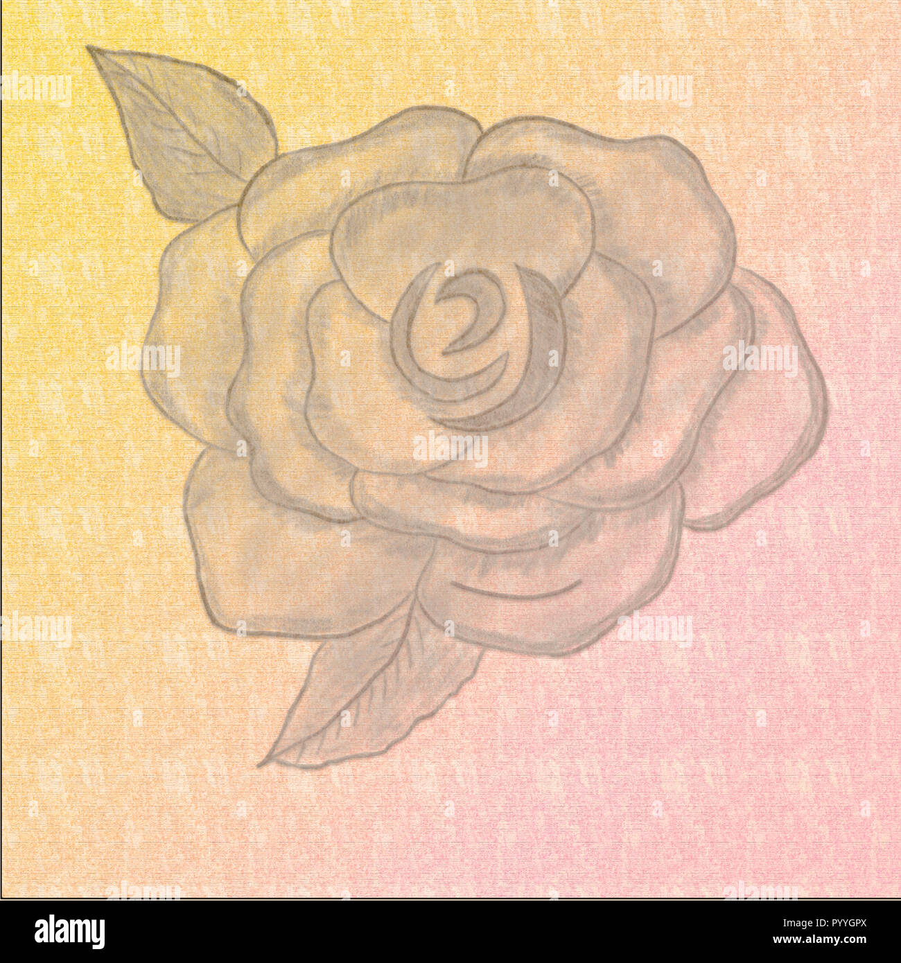 Rose Paper Texture Abstract Background Vintage Paper