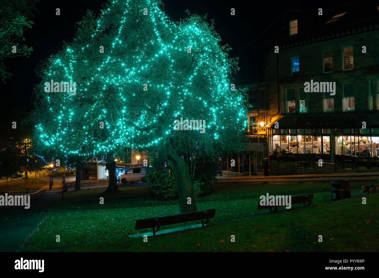 Green lights hanging from a tree at night in Harrogate,North Yorkshire,England. - Stock Image