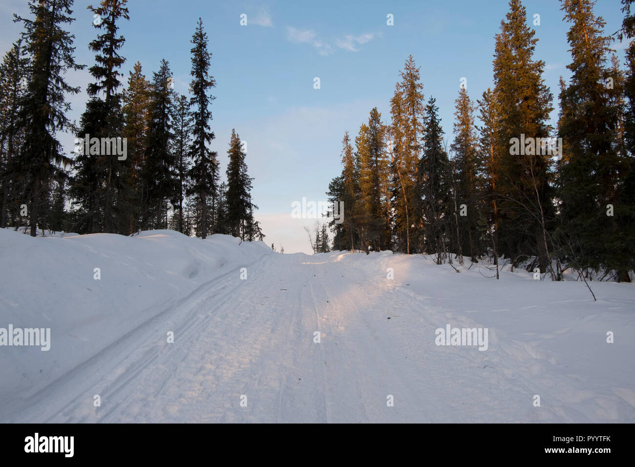 Dog sled path and road near Kituna, Sweden, among the evergreen trees in winter during the winter solstice. - Stock Image