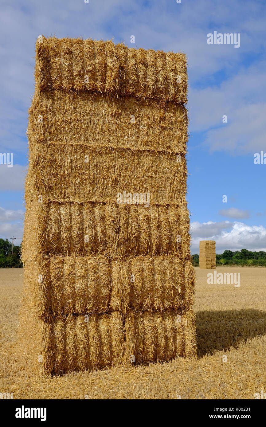 straw bales stacked in a field in Yorkshire, England, in the late summer - Stock Image