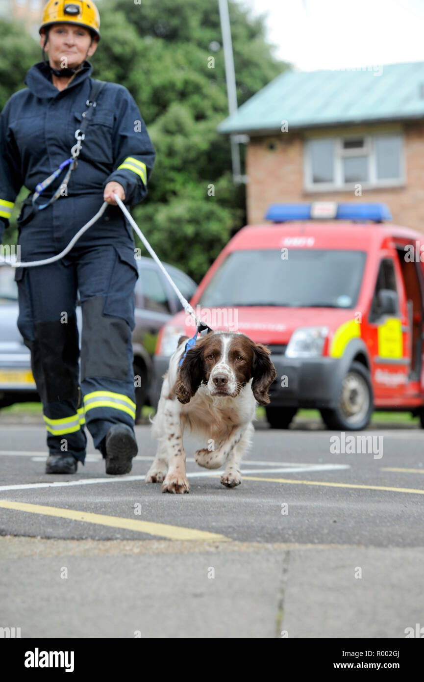 East Sussex Fire - execrise at Thornsdale apartment blocks - Brighton, East Sussex.A sniffer dog searches for source of fire. - Stock Image